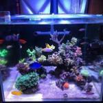 海缸灯分类及作用详解-如何挑选全光谱珊瑚灯 海缸灯具哪种好?