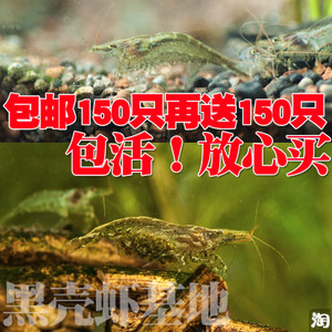 黑壳虾实惠套餐 买150只送150只
