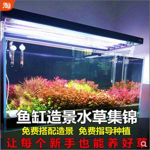 鱼缸造景水草集锦,让每个新手也能养好草