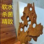 什么是流木?流木和沉木的关系 流木的优缺点