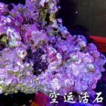 海缸开缸活石种类详解 带藻活石/空运陆运活石/P石/死石