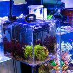 海缸养好珊瑚要降低营养盐,外挂藻缸的作用 去除营养盐详细教程