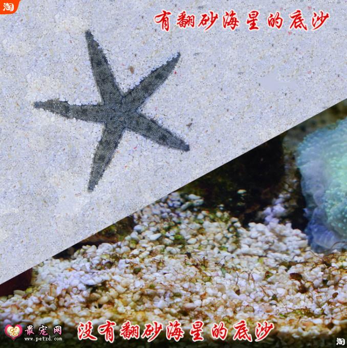 海星怎么养_海水鱼缸的开缸全过程 - 海水缸入门教程如何养海水鱼?海水 ...