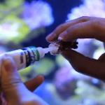 珊瑚胶水在水中粘珊瑚使用方法 不要粘手后去抓珊瑚哦