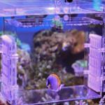 海缸海水鱼得白点病的治疗方法整理