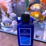 放了硝化细菌后鱼缸水还是浑浊是怎么回事