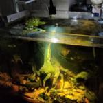 鱼缸水族射灯怎么选?哪个牌子好?射灯使用评测