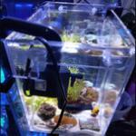 鱼缸外挂藻缸的功能和制作方法