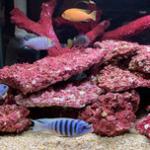 海缸珊瑚造景用人工礁岩不仅方便还环保,三湖缸造景亦可用