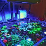 海水鱼缸日常维护速查手册-海盐元素含量参考、海水鱼虾搭配饲养