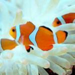 零基础海水缸开缸养第一只小丑鱼的步骤