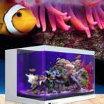下海新手该如何选择海水缸——海缸挑选要点 海缸知识