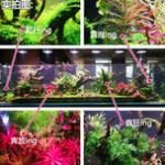 生态水草缸如何选LED灯 - 你不知道的水草灯知识