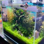 开生态缸该如何选鱼缸? 开缸准备之鱼缸
