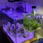 海缸ATS/UAS藻屏过滤系统及藻缸特点对比以及如何选用 海缸用品知识