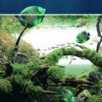 养鱼要有的设备之一——鱼缸的挑选方法 淡海水鱼缸选购知识