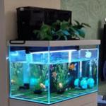 养鱼要有的设备之二——鱼缸过滤器的挑选方法 淡海水鱼缸过滤器选购知识