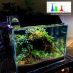 养鱼要有的设备之三——鱼缸灯具的挑选方法 海水珊瑚灯淡水水草灯知识
