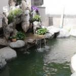 庭院锦鲤鱼池建造步骤与过程分享 鱼池知识